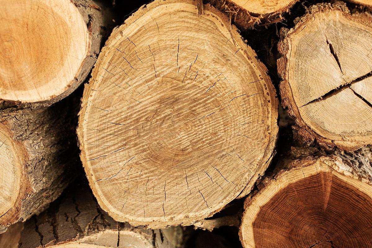 La-descarbonizacion-con-madera-para-la-construccion---Spin-Ingenieros